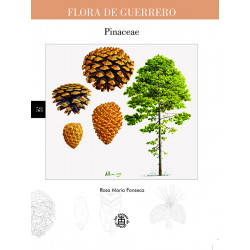 No. 58. Pinaceae