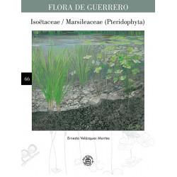 No. 66. Isoetaceae /...