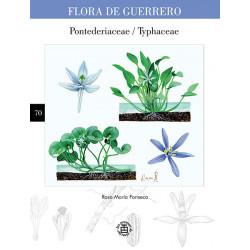 No. 70. Pontederiaceae /...