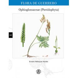 No. 62. Ophioglossaceae