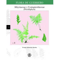 No. 71. Athyriaceae /...